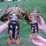 Lobster Berries